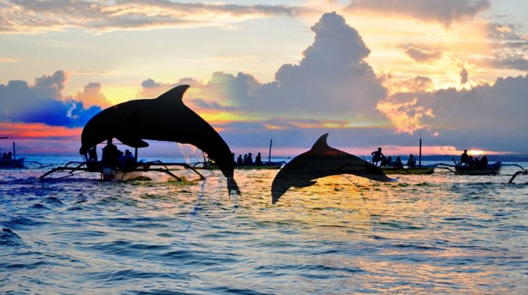 lovina-sunrise-dolphin-watching-tour-tour-2-464841_1551249252.jpg