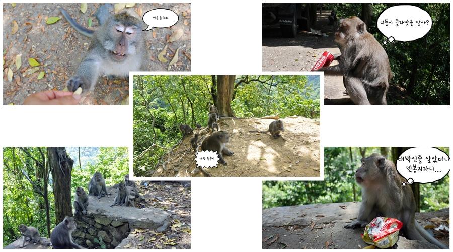 원숭이 숲.jpg